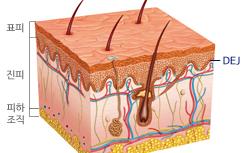 皮肤健康的关键 EDJ